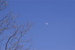 1144-winter_moon_P1583.jpg