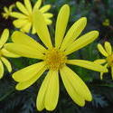 850-yellow_flower02138.JPG