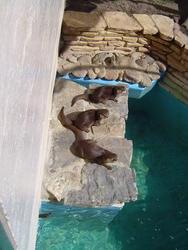 676-zoo_otters169.jpg