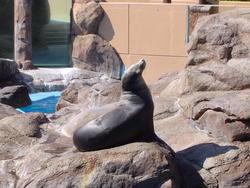 678-zoo_seal_168.jpg