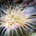 1357-anemone_1350.JPG