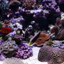 1271-coral_reef_1387.JPG