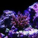 1317-corals_02487.JPG