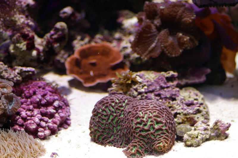 an array of different coloured tropical corals