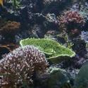1327-green_velvet_plate_coral_0703.JPG
