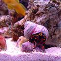 1283-hermit_crab_00996.JPG