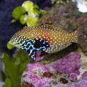 1344-saltwater_tropical_fish_0385.JPG