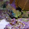 1345-saltwater_tropical_fish_0387.JPG