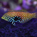 1348-saltwater_tropical_fish_0802.JPG