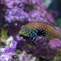 1293-saltwater_tropical_fish_0804.JPG