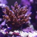 1295-tropical_corals_0448.JPG