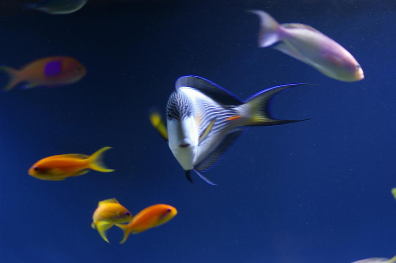 a selection of colourful saltwater tropical fish