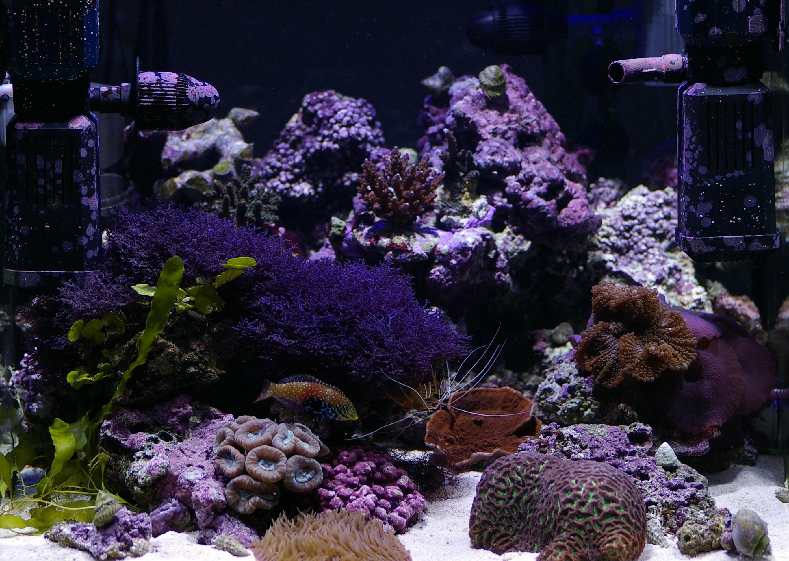 Saltwater Aquarium Fish Uk Aquatic Gardens