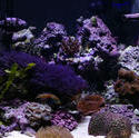 1352-tropical_saltwater_aquarium_0835.JPG