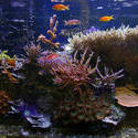 1359-tropical saltwater aquarium