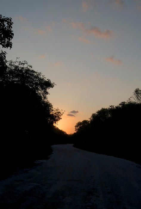 The last light of the day, walking a jungle track in mexico
