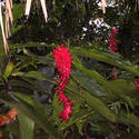1796-Rainforest Flowers
