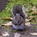 2883-Squirrel