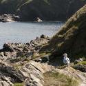 2714-coastal cliffs