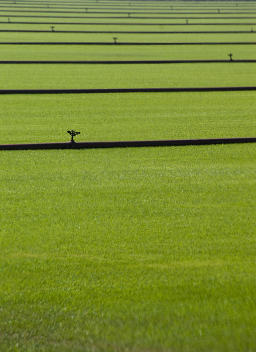 lines of irrigation sprinkler pipes water a field of grass