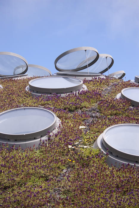 the living roof on the Academy of Sciences building, Goldengate park, san francisco