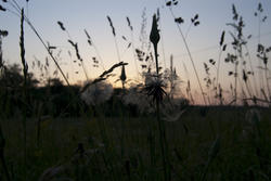 2794-summer meadow sunset