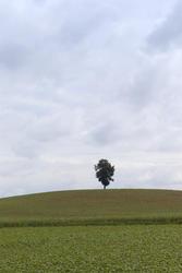 2801-lone tree