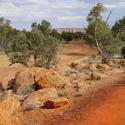 2917-arid landscape