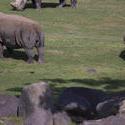 2255-rhino