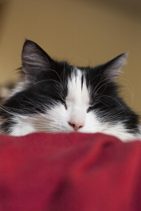 a cute black and white cat fast asleep