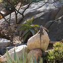 2261-sunning lizard