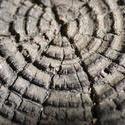 2859-tree_rings.jpg