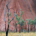 2927-trees and uluru