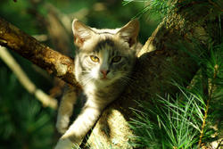3734-Cat In Tree