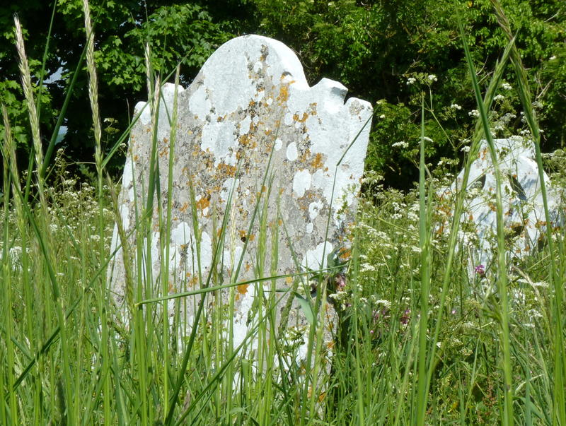 <p>Old Headstones amongst the flora and fauna in Coombe Keynes churchyard.</p>