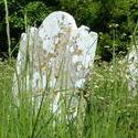 3851   Coombe Keynes churchyard.JPG