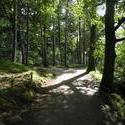 3709-Lakeland_Walk.JPG