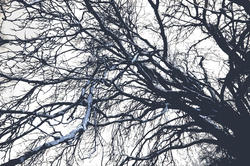 3000-winter trees branches