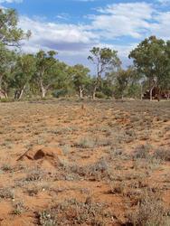 4111-arid australia landscape