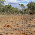4111-arid australia landscape