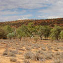 4098   dry landscape