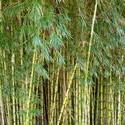 3855-bamboo_forest.JPG