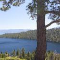 3050-california_alpine_woods.jpg