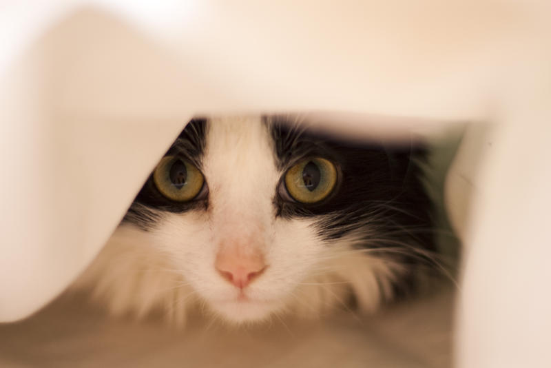 a cute black and white cat hiding under the bed coveres