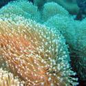 3343-coral polyps macro