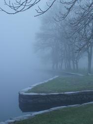 3447-misty trees