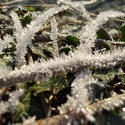 3427-frost crystals