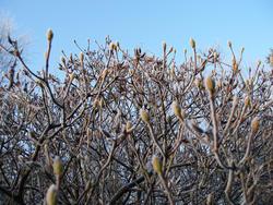 3459-frosty garden
