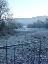 3462-cold frosty morning