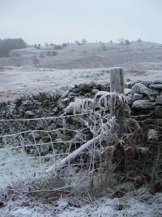 a wire fence, stone wall and frozen common